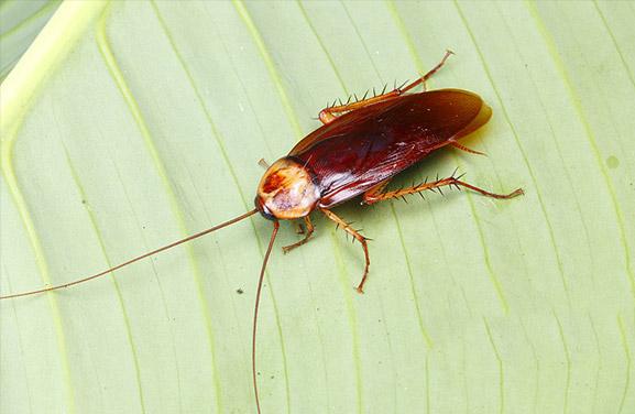 有什么方法可以消灭蟑螂吗?