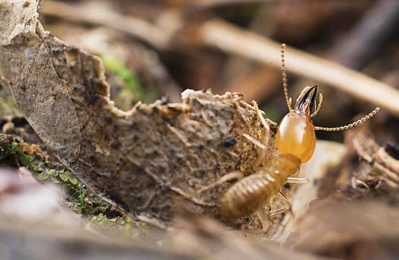 消灭白蚁什么办法有效