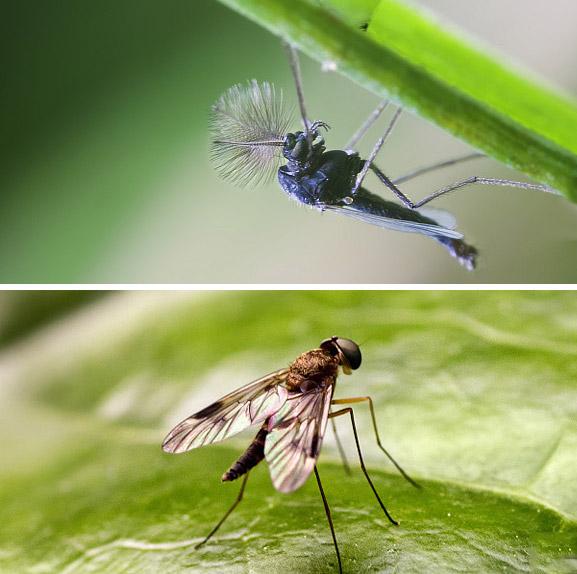 如何消灭果蝇?